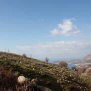 Albanian Sheep and Wool