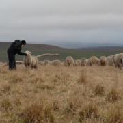 Nan Bray - White Gum Wool